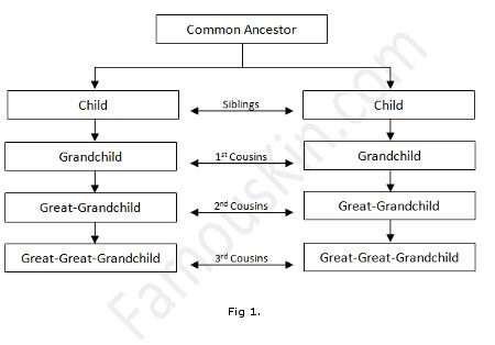 Consanguinity Chart Example